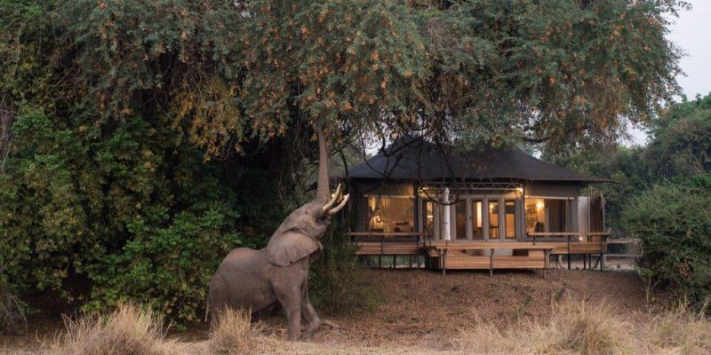 Chikwenya -Bedroom & Wildlife