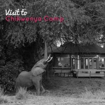 Elephant at Chikwenya