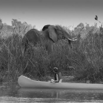 Elephant in Lower Zambezi